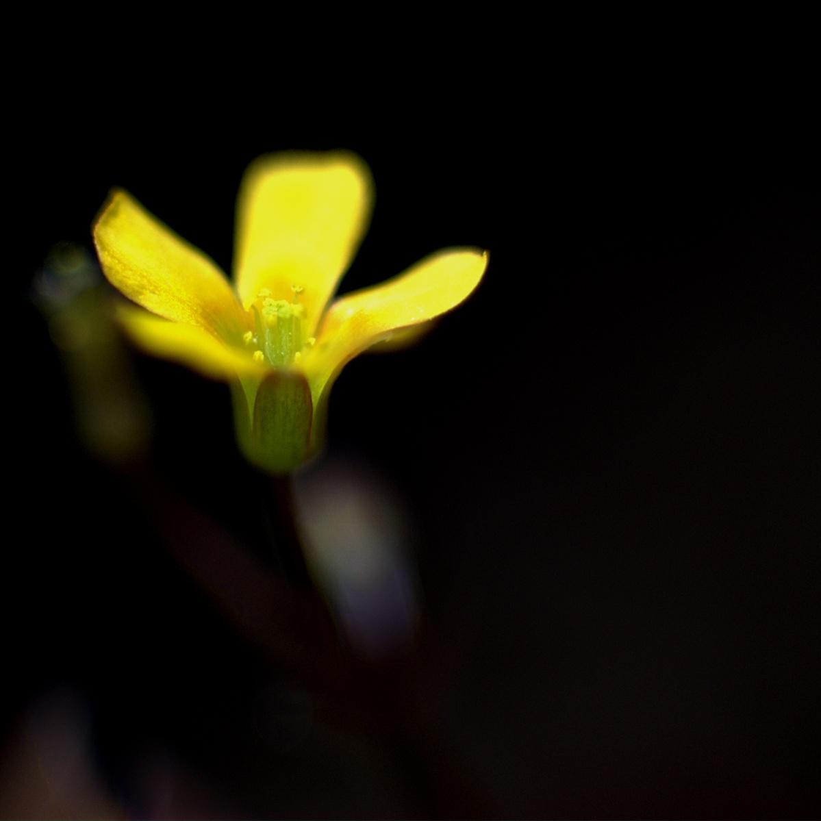 Kleines gelbes Blümchen ganz groß