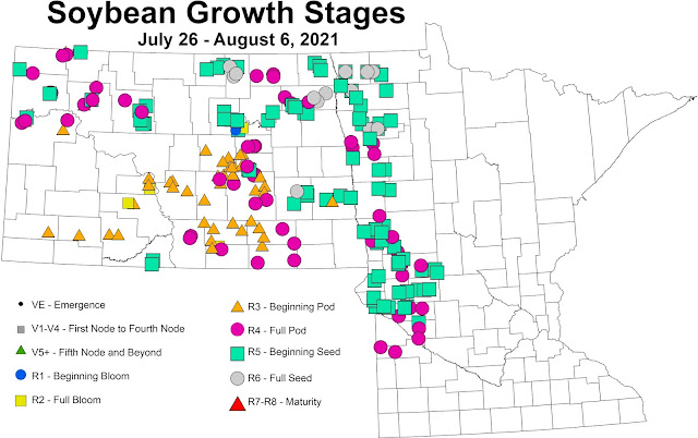 Map of growth stages of soybeans in fields scouted