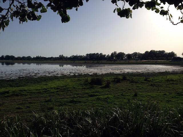 Laguna en El Rocío, Parque de Doñana