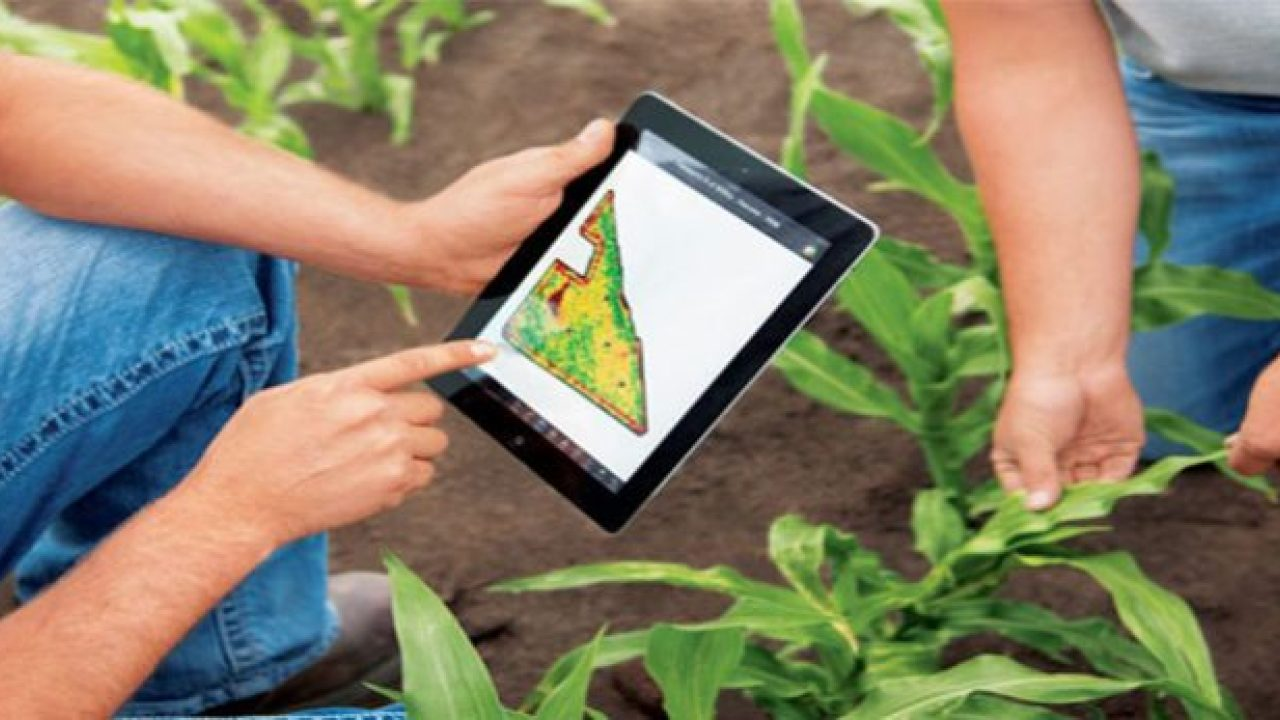 eksport usaha pertanian
