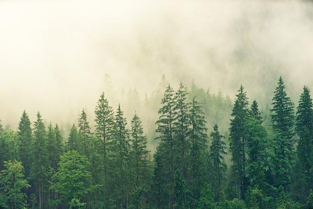 Plantar un billón de árboles no salvará al planeta del calentamiento global