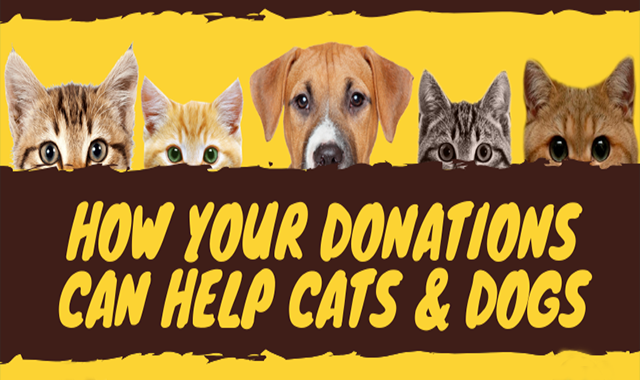 How Your Donations Can Help Cats & Dogs #infographic