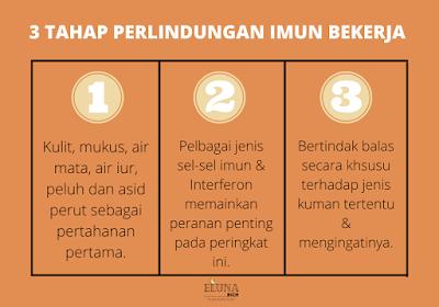 3 tahap perlindungan imun bekerja
