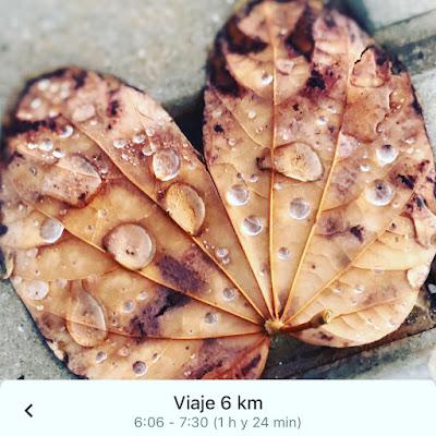 hojas-de-lluvia