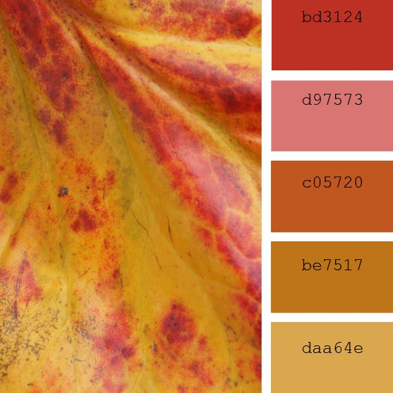 dry leaves color palette