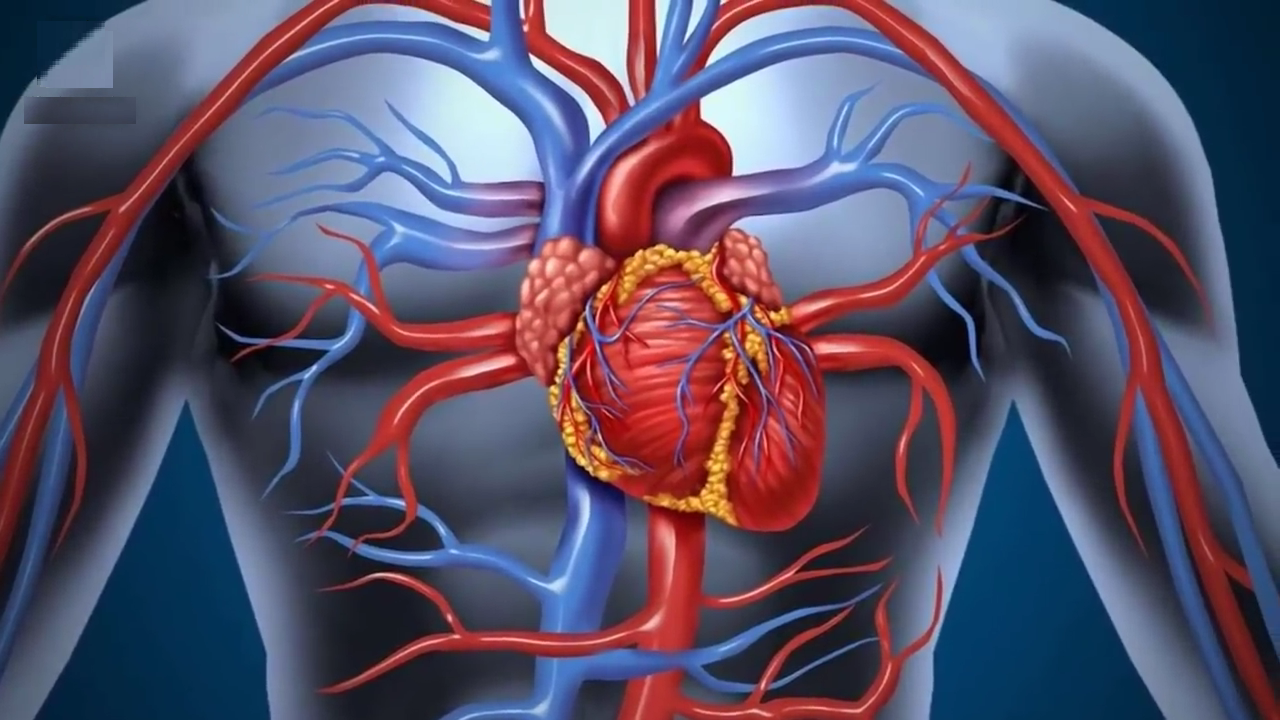 Clogged arteries? Here are the first 5 things you should do to clean up your diet