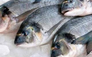 Ciri-Ciri Ikan Segar