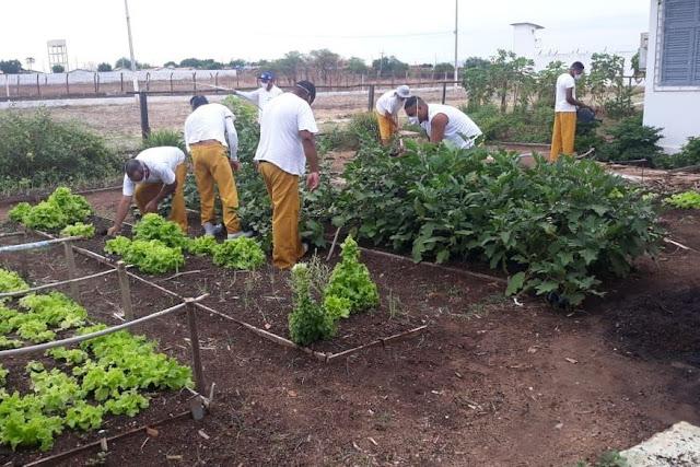 Com chegada de chuvas no Sertão, detentos trabalham em plantação para diminuir pena