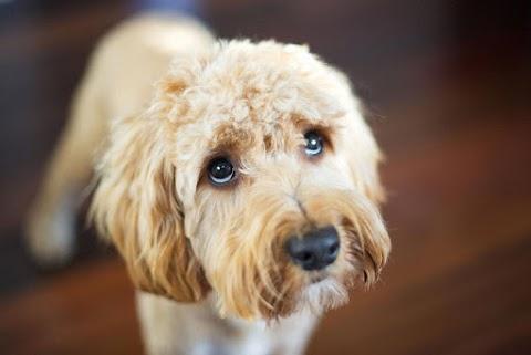 Kis híján halálra kínoztak egy kutyát Szekszárdon