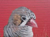 Street Art in Ainslie by Byrd   Canberra Street Art