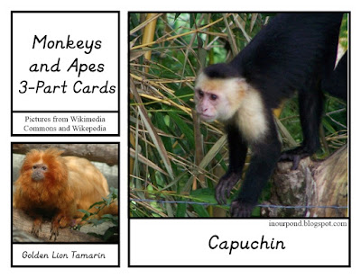 FREE 3-Part Cards for Safari Ltd Monkey and Ape Toob from In Our Pond