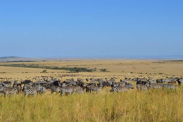 top 10 best places to explore in africa, masai mara national reserve, masai mara national reserve in kenya, masai mara national reserve kenya, map of masai mara national reserves, masai mara national reserve map, africa map, africa, african, africa country, african countries, africa flag, african grey parrot, african elephant, africa song, africa twin, africa capital, african union, africa time, africa currency, african parrot, africa jungle,