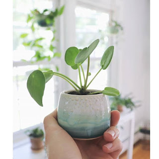 Modne rośliny do mieszkania