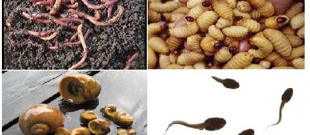 Ini Dia Makanan Belut yang Bagus untuk Pertumbuhan