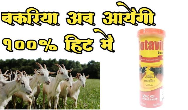 Treatment For Goat Heat Problem