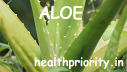 Aloe Vera : A Wonder Plant, Know Health Benefits and Medicinal Uses Of Aloe Vera