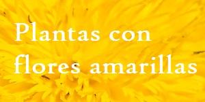 Plantas con flores amarillas