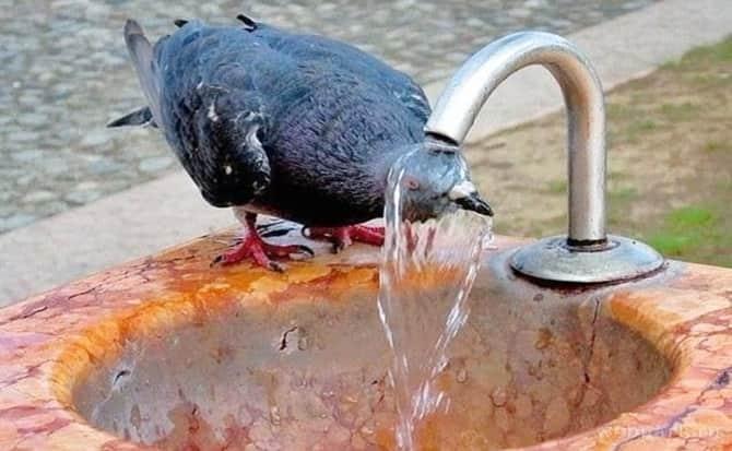 sed, bañarse, mojar,