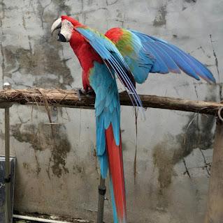 harga jual macaw terbaru