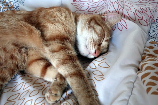 motan roscat