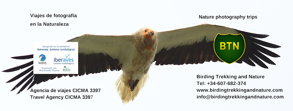 Viajes de pajareo, Spain birding trips