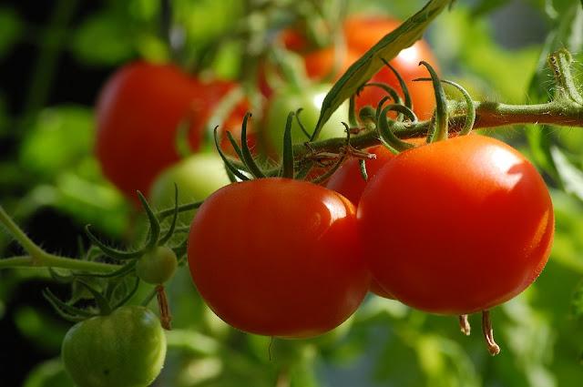 Cara Menghilangkan Jerawat Menggunakan Tomat