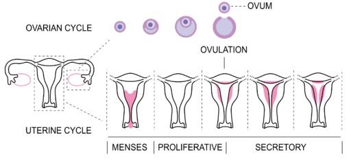 Perbedaan Prilaku Menjaga Personal Hygiene Saat Menstruasi Pada Remaja Putri