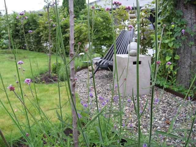 Nærbilde av Kjempeverbena i samplanting med Lavendel. Furulunden