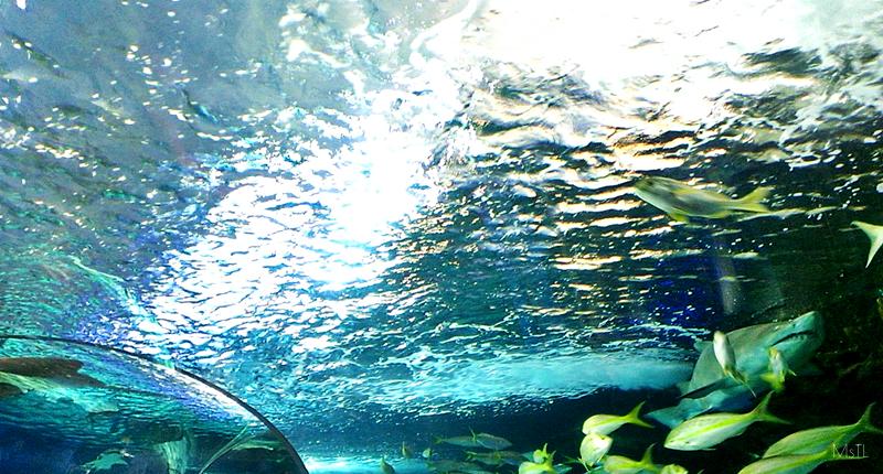 Ripleys-Aquarium-Underwater-Surface