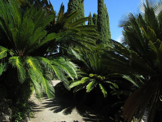 Viale delle Cycas