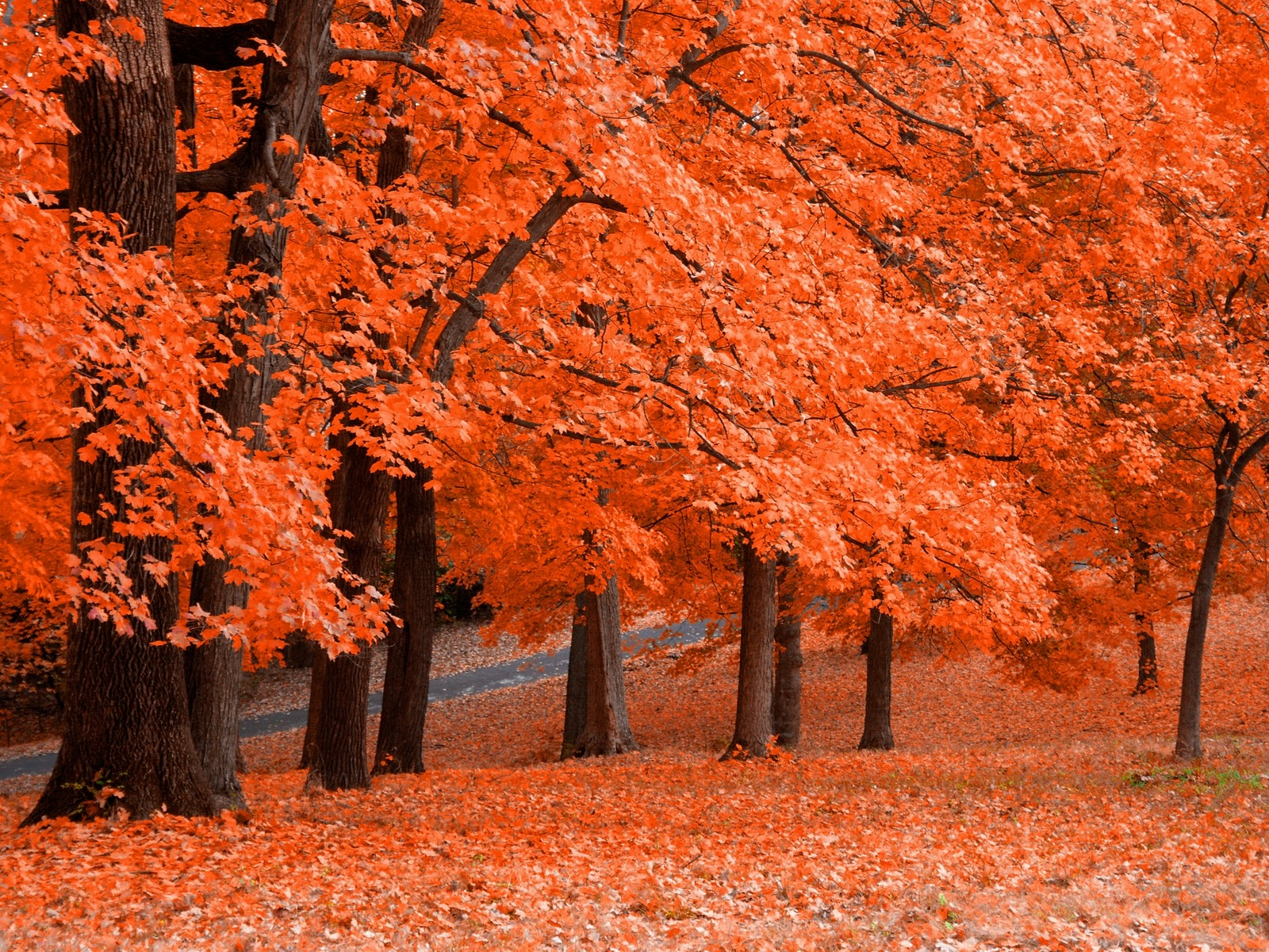 Gambar Pemandangan Musim Gugur yang Sangat Indah
