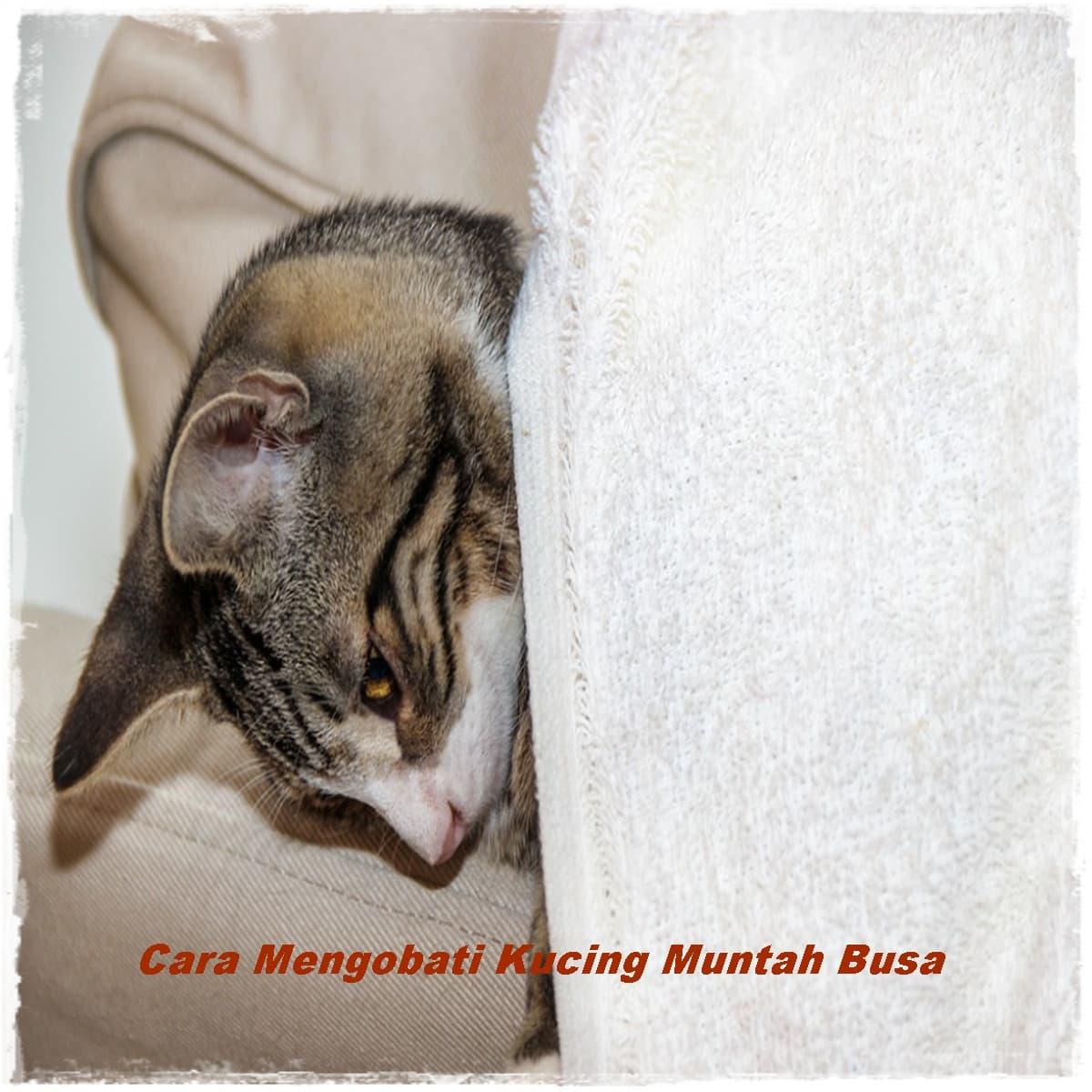 Cara Mengobati Kucing Muntah Busa, Lihat Disini ...