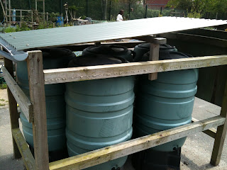 saving water, gardening, uses for water butts, life on pig row