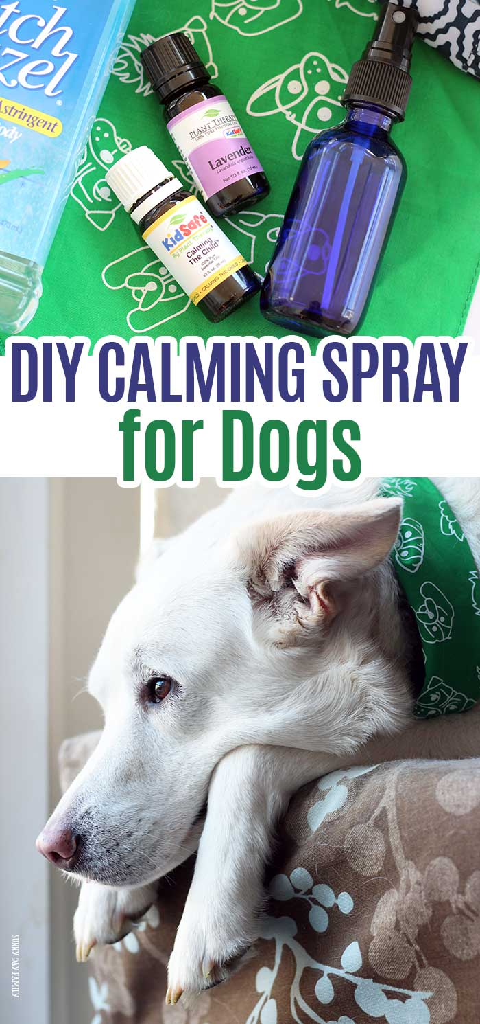 Make a DIY dog calming spray for your dog's bed, crate, or the car - anywhere you need to help your dog relax! Perfect for anxiety in dogs, separation anxiety, crate training, and more. Natural remedy for dogs that keeps them calm when they are stressed. #essentialoils #dogmom #doghealth #homemade