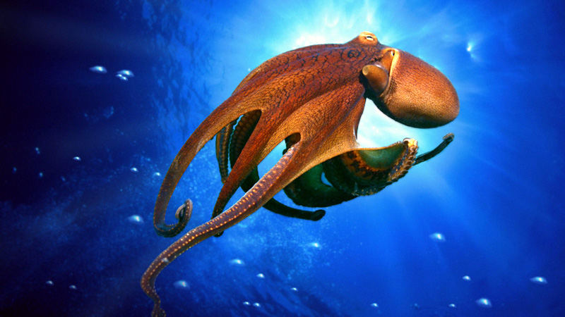 Incredible Octopus Photos and Facts