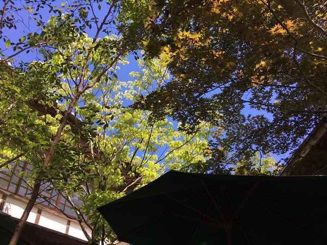 木々の間の青空