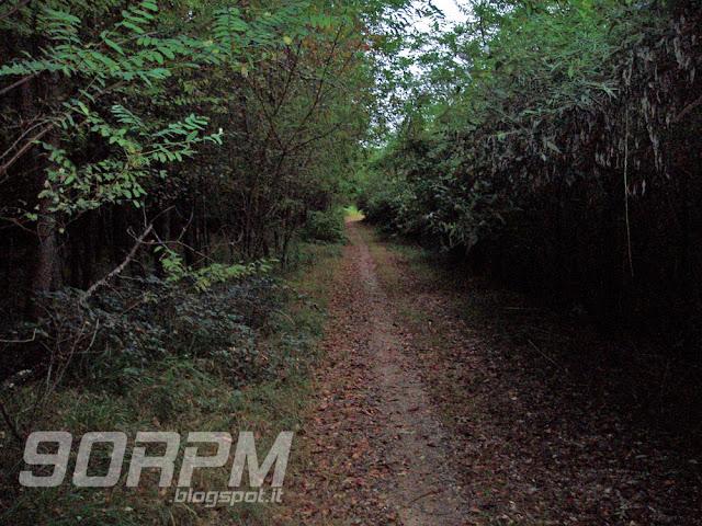 """Rettilineo facile e piacevole in un bosco lungo il percorso della """"Bozzente off-road"""""""