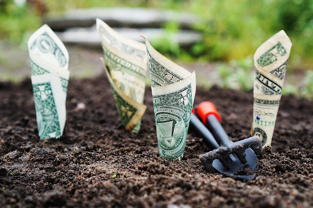 Planting money which shows investing money