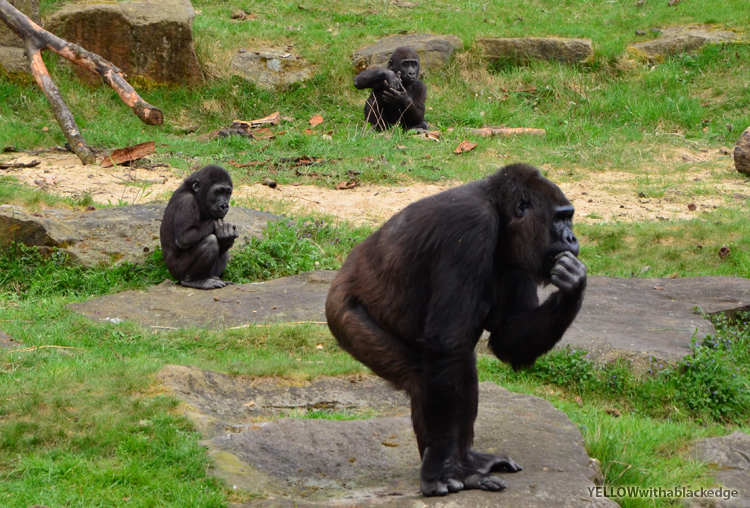 Yellow With a Black Edge: Weekend break: monkey forest