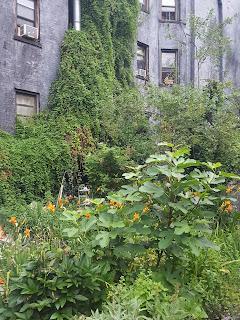 jardin comunitario en nueva york