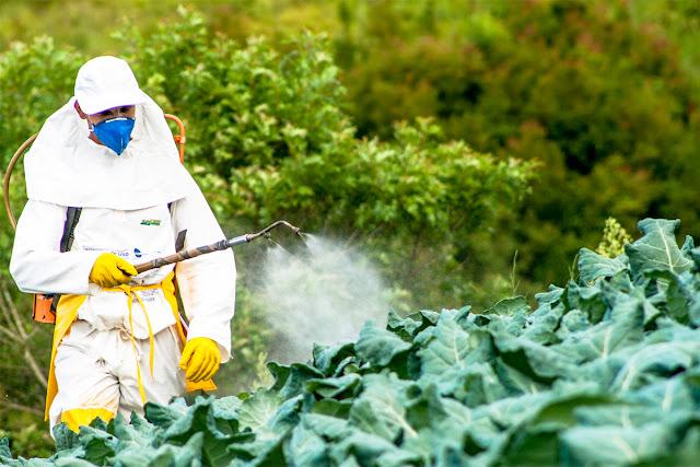 Dampak Negatif Pestisida Bagi Kesehatan
