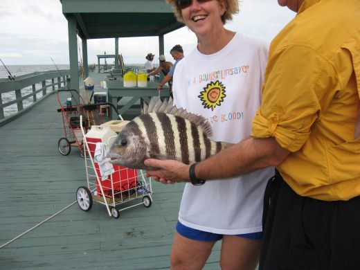 Saltwater Fishing Tips for the South: Sheepshead Fish ... Are Saltwater Sheepshead Fish Good To Eat