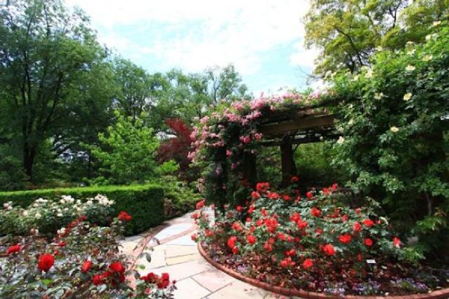 taman bunga mawar