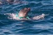 لماذا تموت الاسماك عندما ترمى النفايات في البحر