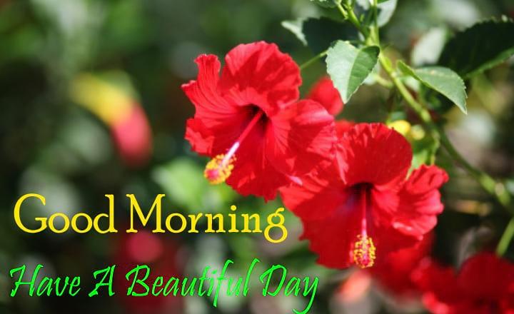 Good Morning Hibiscus Flowers