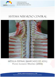 Médula Espinal