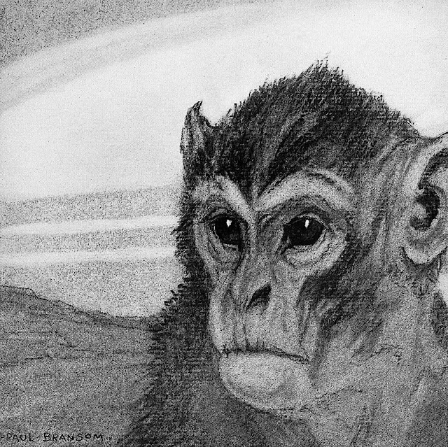a Paul Bransom illustration of a serious monkey face