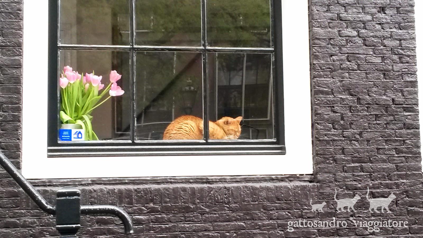 Gatto rosso alla finestra