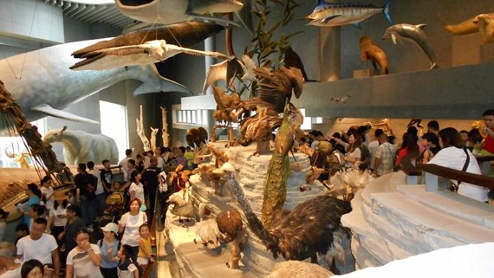 上海自然博物館大型展示品