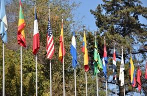 Arbitragem Internacional